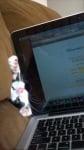 Котка, захапала лаптоп