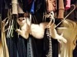 Котка, заседнала в закачалките за дрехи
