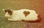 Котка на пътя