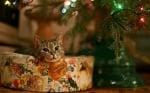 Котка с елха