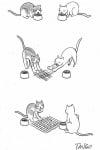 Котки играят морски шах