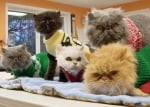 Котки с пуловери
