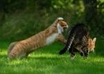 Котки се бият