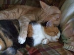 Котки се прегръщат