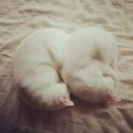 Котки, спящи на кълбо