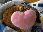 Котки спят на сърчице