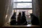 Котки съквартиранти