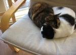 Котки у дома