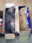 Котки в кашони