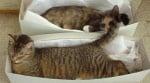 Котки в кутии от обувки