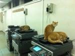 Котки в офис