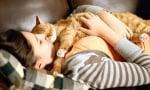 Котките - наслада