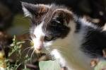 Краси котенцето