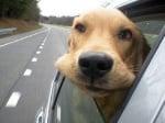 Куче гледа през прозорец