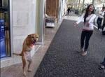 Куче ходи на задни крака, повдига духа на хората