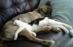 Куче и котка спят заедно