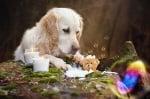 Куче и мече