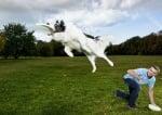 Куче играе с фризби