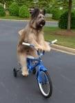 Куче кара колело