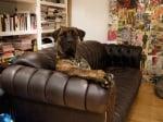 Куче на дивана