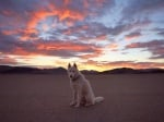 Куче на фона на залез