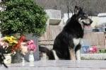 Куче на гроба на стопанина