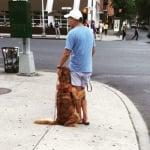 Куче на пешеходна пътека