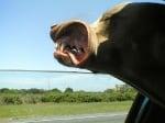 Куче на вятъра