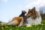 Куче осинови лисиче, след като майка му загина при автомобилна катастрофа