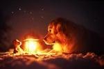 Куче под звездите