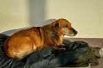 Куче прекарва почти година пред болница, чакайки починалия си стопанин