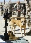 Куче при войниците