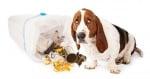 Куче яде боклуци