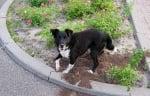 Куче рови в цветна градинка