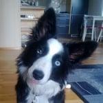 Куче с бяло петно в окото