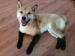 Куче с черни крака