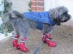 Куче с дъждобран и ботушки