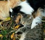 Куче с две котки