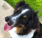 Куче с двойно носле, което никой не иска, вече се радва на новия си стопанин