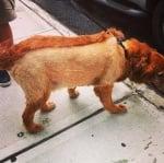 Куче с интересна прическа