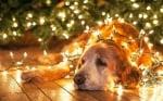 Куче с лампички за Коледа