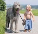 Куче с малко момченце