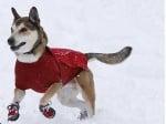 Куче с обувки през зимата