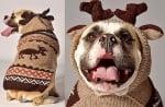 Куче с пуловер