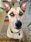Куче с уникални очи