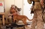 Куче с войник
