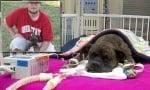 Куче се бори за живота си, след като се опита да спаси стопанина си от пожар