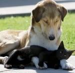 Куче се грижи за котка