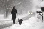 Куче се разхожда през зимата