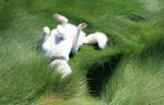Куче в тревата